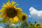 Желто-синее настроение